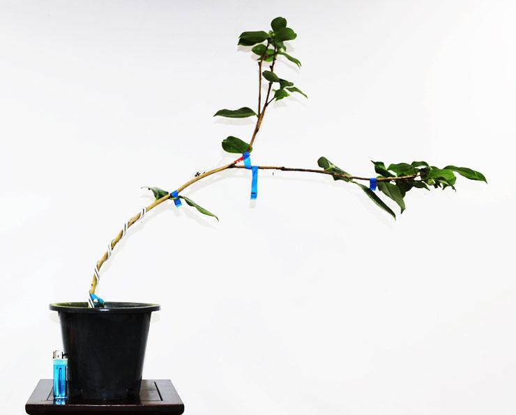 동백나무-채두-2.jpg